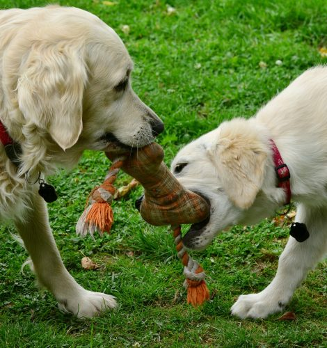 dogs-2556820_1920